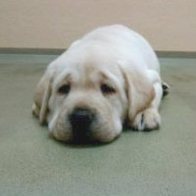 Baby Esme lying with head on the floor